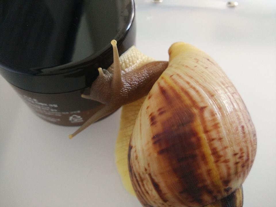 улитка с кремом