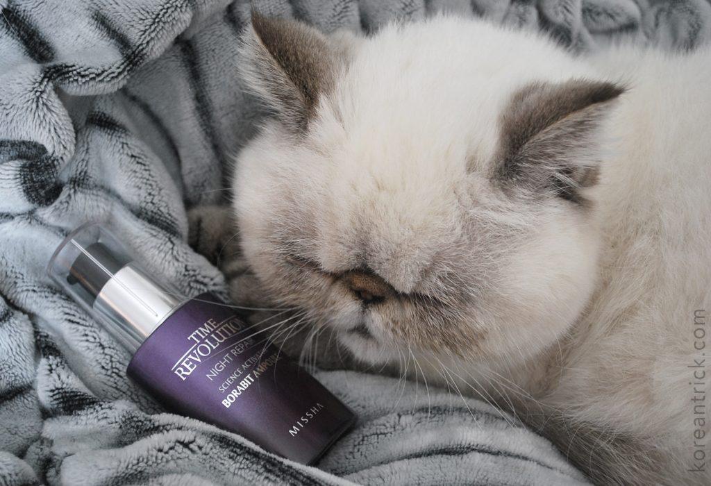 спящий кот с сывороткой
